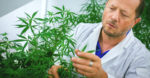 Scientists develop new medical cannabis cultivars that show promise in combating COVID-19 virus